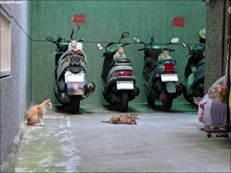 skootterit_varattu.jpg