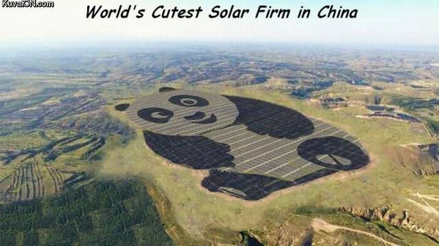 solarfirm.jpg