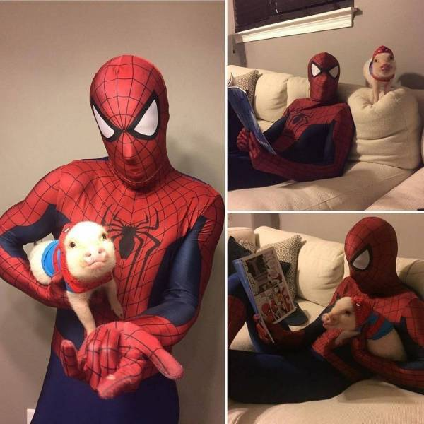 spiderman_and_spiderpig3.jpg