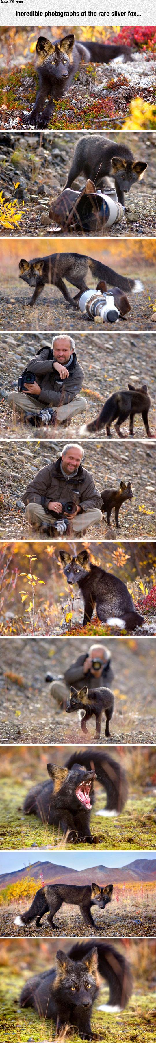 such_a_beautiful_animal.jpg