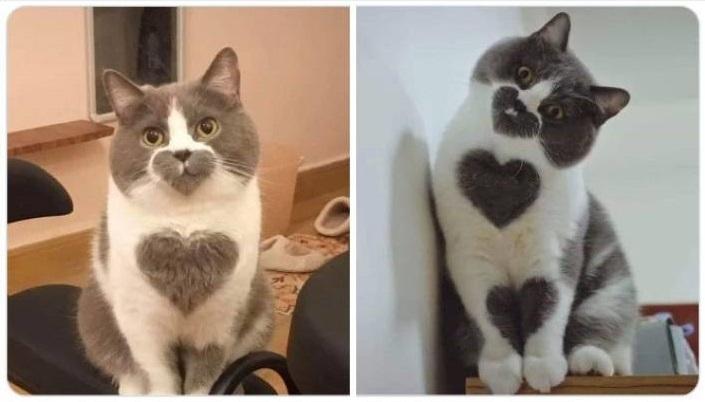 sydamet5.jpg