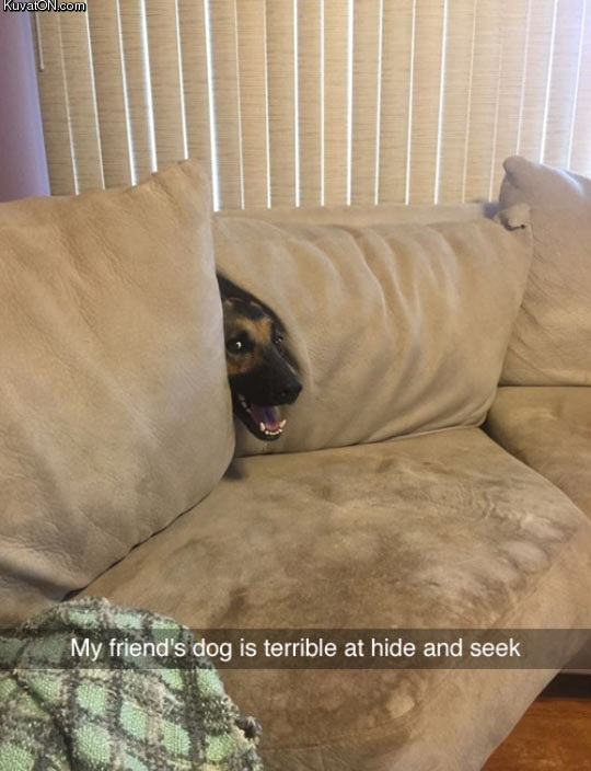 terrible_at_hide_and_seek.jpg