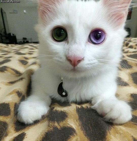 that_eye_color.jpg