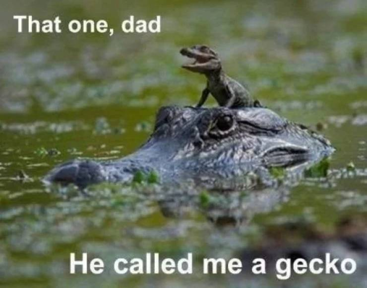 that_on_dad.jpg