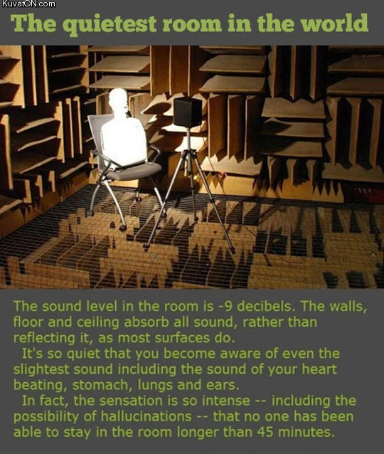 the_quietest_room_in_the_world.jpg