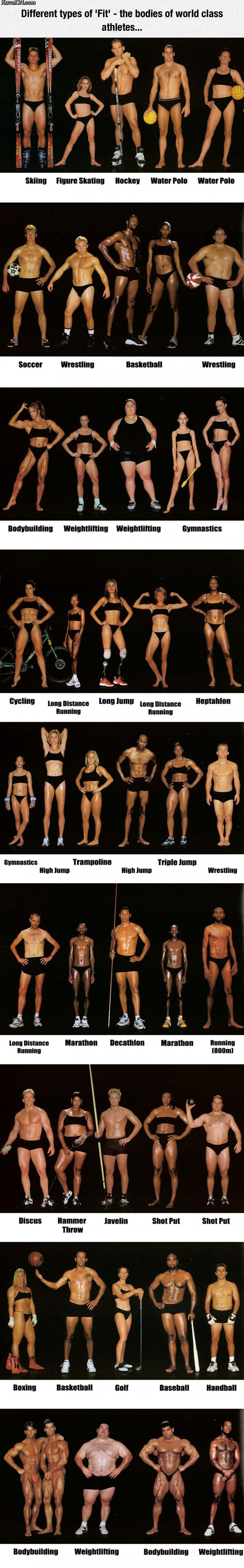 the_shape_of_your_body_depends_on_the_sport_you_do.jpg