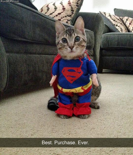 the_super_kitty.jpg