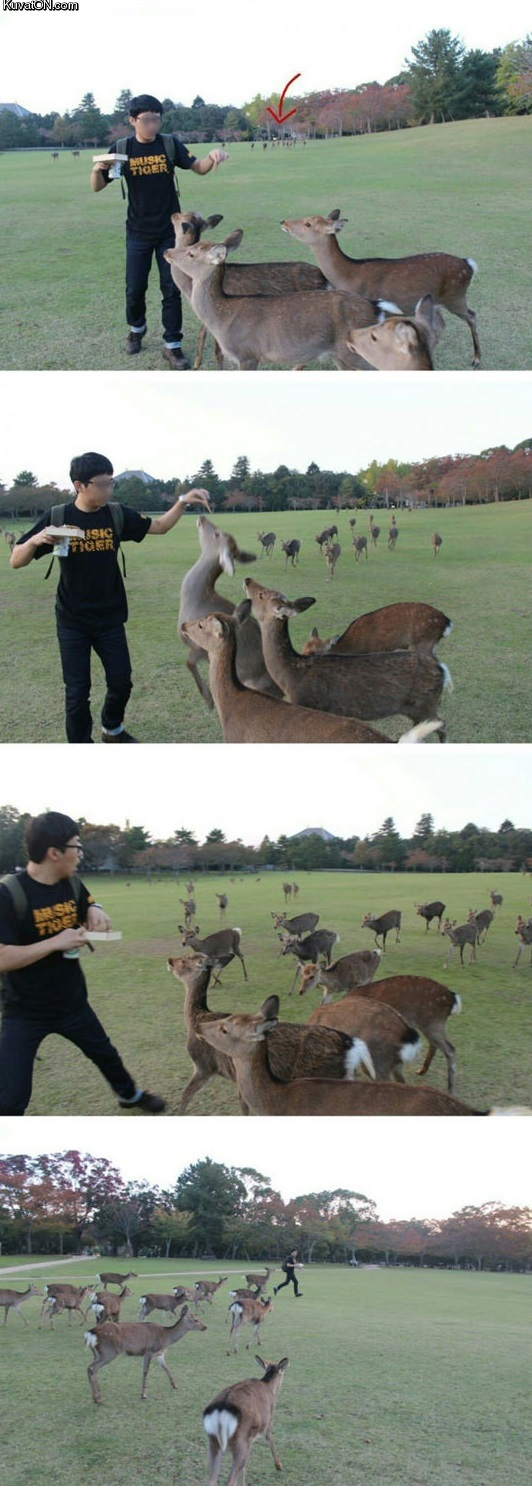 this_guy_was_just_trying_to_feed_some_deers.jpg