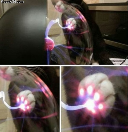 this_is_what_happens_when_a_cat_touch_a_plasma_ball.jpg