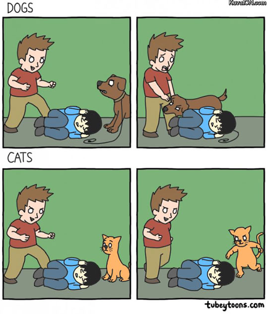 this_is_why_i_really_dislike_cats.jpg