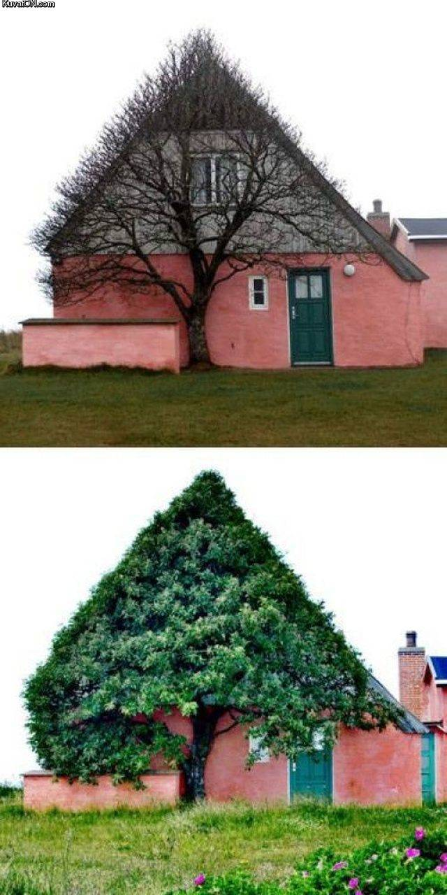 tree42.jpg