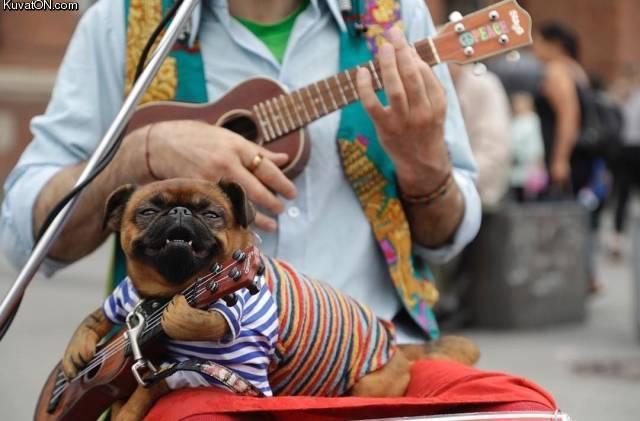 ukuleledoge.jpg