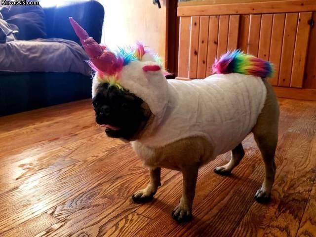 unicorncostume.jpg