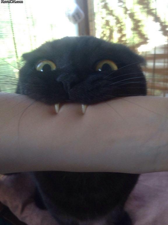 vampyyri.jpg