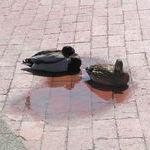 bird_pond.jpg