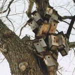 bird_slum_housing.jpg