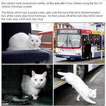 bussikissa.jpg