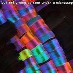 butterfly_wing.jpg