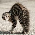 cat114.jpg