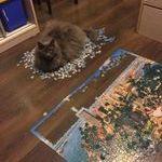 cat235.jpg