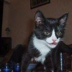 cat67.jpg