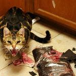 cat74.jpg