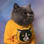cat741.jpg