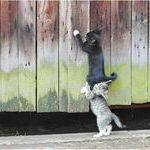 cats_teamwork.jpg