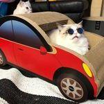 cool_cat3.jpg