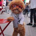 cool_dog__.jpg