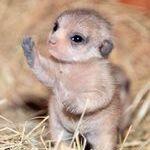 cute_hi.jpg