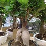 dirty_bonsai.jpg