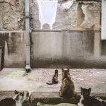 djandcats.jpg
