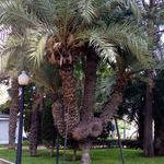 do_you_even_tree.jpg