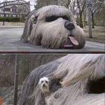 dogcar3.jpg