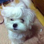 dogs_hair.jpg