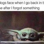 dogsface.jpg