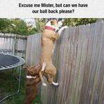 excuse_me_mister.jpg