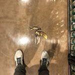 floor_art.jpg
