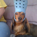 funny_dog_2.jpg