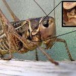 grasshopper_face.jpg