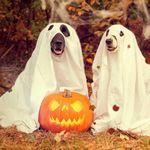 halloweendogs.jpg