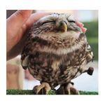 happy_owl.jpg