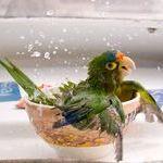 happy_parrot.jpg