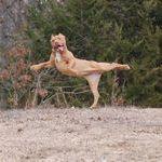 happydog.jpg