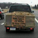 honeybees2.jpg