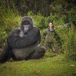 iso_gorilla.jpg