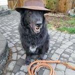 jonesin_koira.jpg