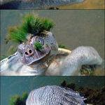 kilpparin_fleda.jpg