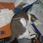 kissa_ja_hiiri.jpg